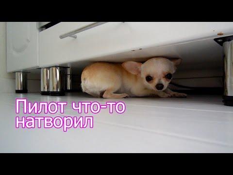 Пилот, Илья Черт - С глазу на глаз