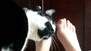 Cat Foot Rub