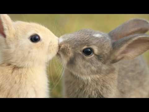 17 Интересни факта за животните