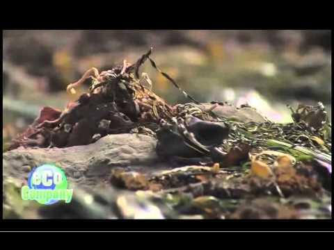 Jordan Fowler - Eco Company - Marine Science Institute/Castilleja School - 04/28/2012