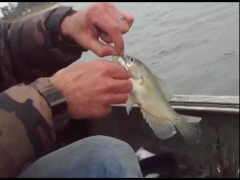 Crappie fishing videos for Lake of the pines fishing report