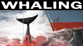 Whale Hunting and Its Future | SHOCKING Video | 1970 Documentary Film on Whales and Whaling Industry