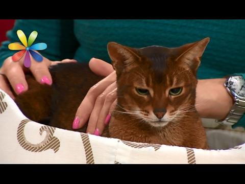 Вы и не подозревали, чего на самом деле боятся ваши кошки! – Все буде добре. Выпуск 960 от 02.02.17