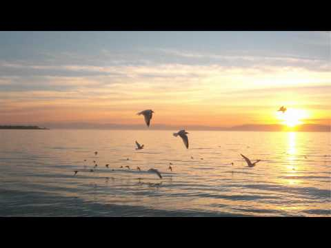 Under Sun - Capoeira (Airbase Pres. Scarab Remix)