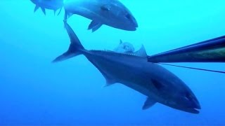 Spearfishing 29kg Amberjack - Chasse seriole avec Bastox Nox Diving