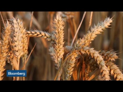 What's Driving Corn and Wheat Prices?