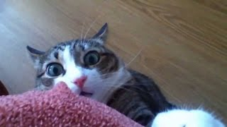 Funny Stalking Cat Video Compilation 2013