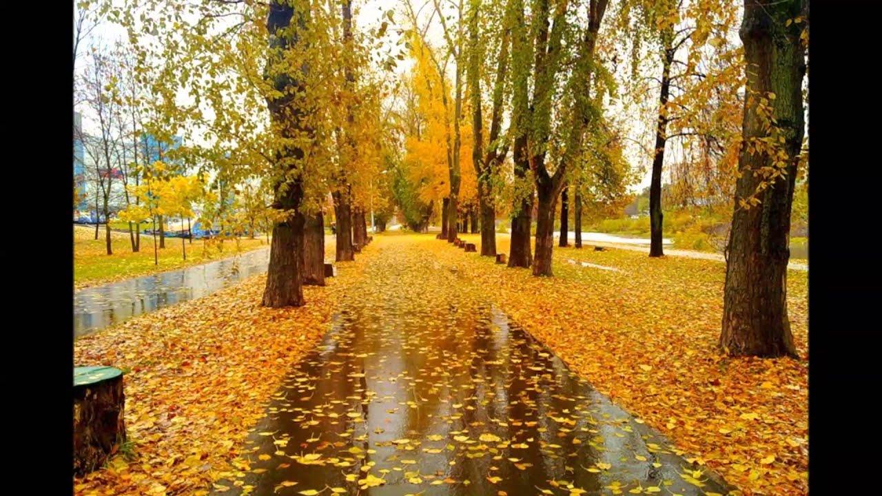 Яндекс золотой дождь 15 фотография