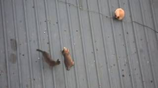 Cats playing with each other