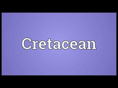 Header of cretacean