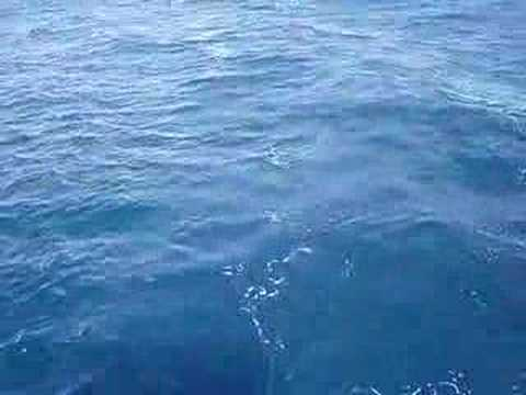 Sail Fish fishing (part 1)