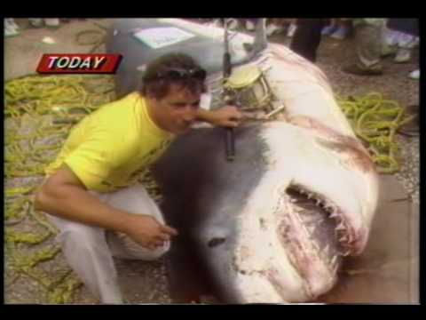 World's Biggest Shark caught on a rod and reel. August 1986