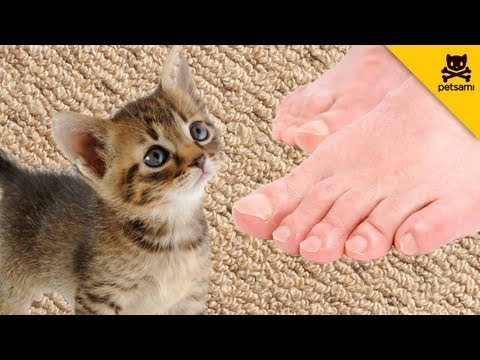 Kitten faints because of man's smelly feet