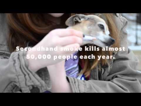 Cigarettes Kill Pets - KLSH