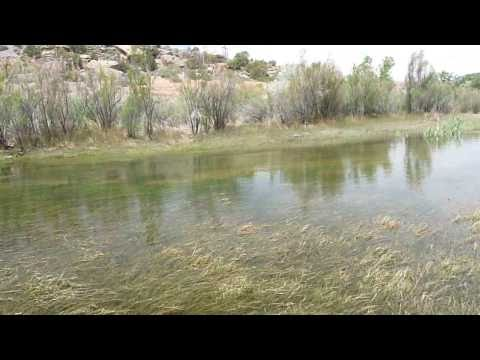 Big Trout strike San Juan River fly fishing spring runoff, AK 47 fly, June 2009