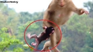 Pity! Why female monkey Bonita kidnap newborn baby monkey Nanda so nasty like this, Samnnag kh