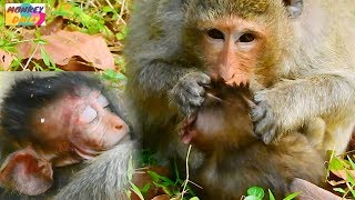 OMG!Elsa bite her baby Kelly many times make baby deeply hurt Sadly Kelly cry loudly Monkey Daily449