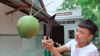 Thử Thách Chặt Quả Dừa Lơ Lững Trên Không