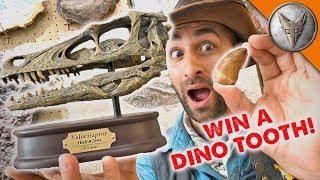 Dinosaur Treasure! - WILL YOU WIN?