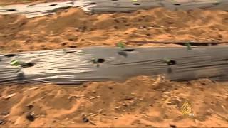 الاقتصاد والناس- الزراعة في المغرب