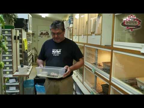 Henry Piorun Reptile Ventures Ep 06 - The Dreamsicle Clutch - Dec 18, 2013