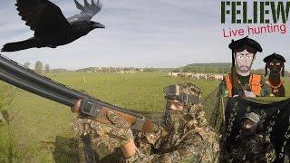 Quelques beaux coups à la chasse au corbeau...