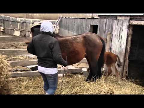 Лошадей загнали в рамки