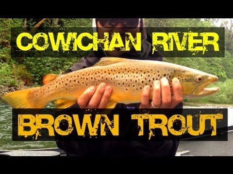 Fishing Vancouver Island - Brown Trout Cowichan River
