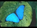 Paul Mauriat - Butterfly - Butterfly Day ecards - Events Greeting Cards