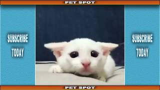 Try Not To Laugh Challenge - Funny Cats Dogs And Other Animals - Compilation #1