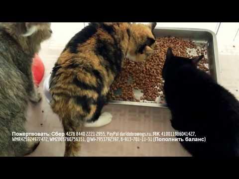 Зоогостиницы и содержание животны