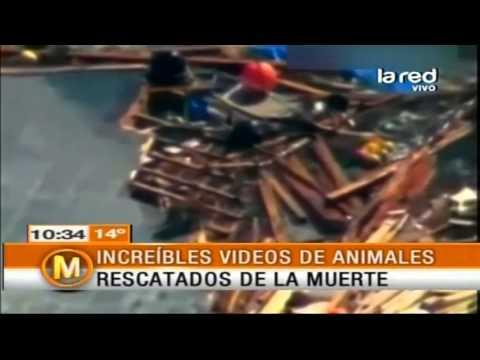 Increíbles videos de animales rescatados de la muerte