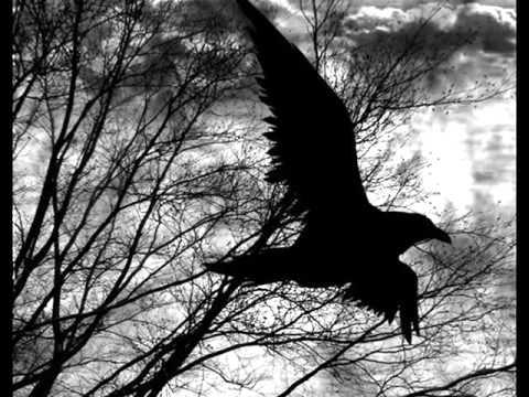 Бледный - Бледный (25/17) - Птица