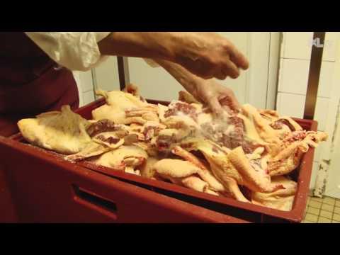 Reportage chez Florence Lacère, productrice de canard gras