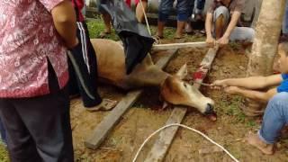 malaysite korbanir goro kibabe jobai kore dekhon