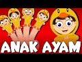 Tek kotek kotek | Versi baru | Lagu Anak-Anak Indonesia Terpopuler | Kumpulan | Lagu Anak TV