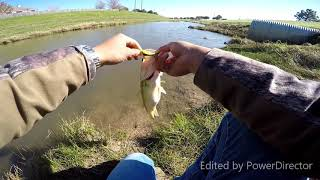 Bass Fishing Creeks (WINTER FINESSE!!!!)