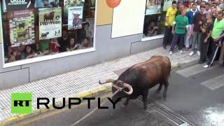 On the rampage: 3 injured as bull escapes at Spanish festival