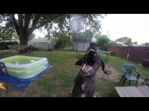 リーフブロワーと犬の攻防 落ち葉を飛ばすだけじゃない!遊び方