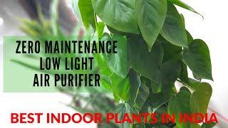Best Indoor plants in India for Oxygen & Clean Air by NASA (Bedroom, Living Room, Office)