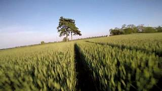 Three Trees - FPV Freestyle