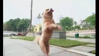 Chó Tony nổi tiếng được mời đóng phim chờ em đến ngày mai.