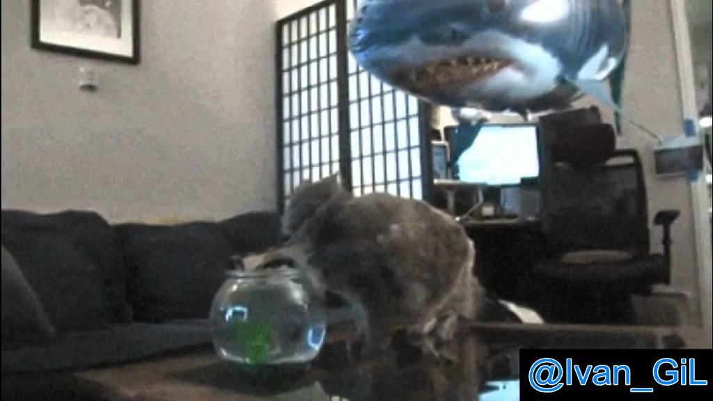 Shark Balloon Cat Cat Get Scared by a Shark