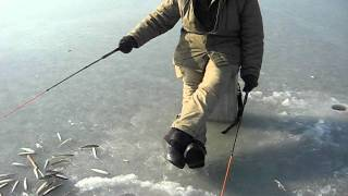 Smelt ice fishing (Russia, Far East, Vladivostok)