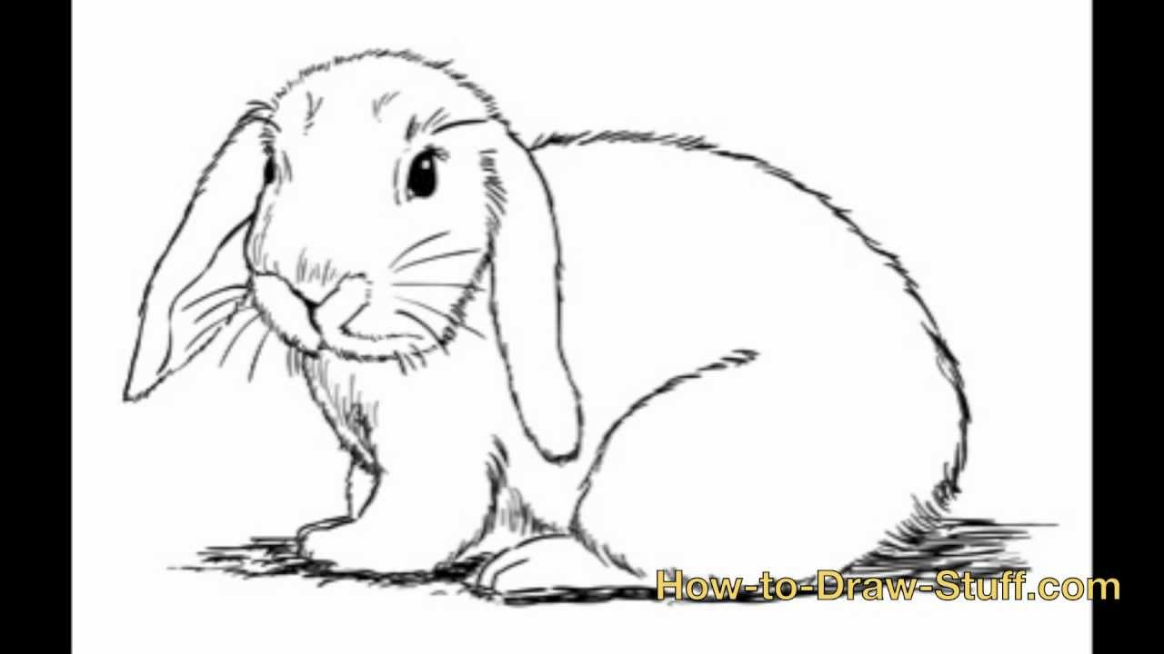 how to draw the rabbit