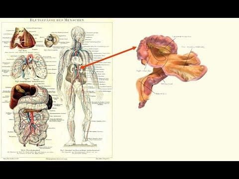 Sensation !! Neues Menschliches Organ entdeckt