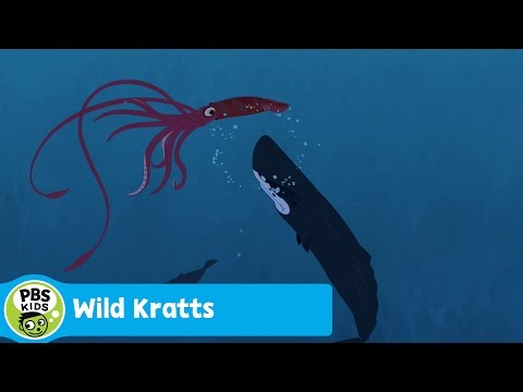 WILD KRATTS | Sperm Whale Vs. Giant Squid