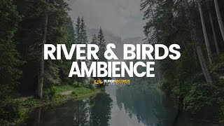 Nature Sound Effects Birds Water Sounds Free Download