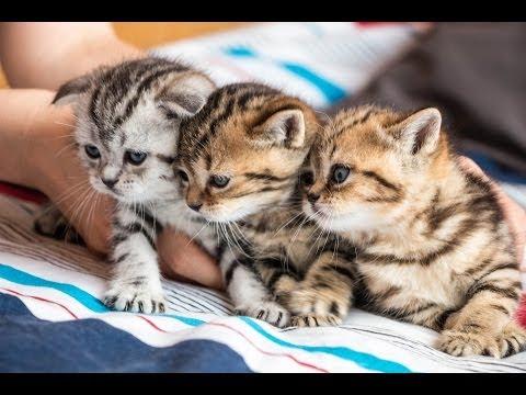 ♥ KITTY VLOG ♥ 28.06.14