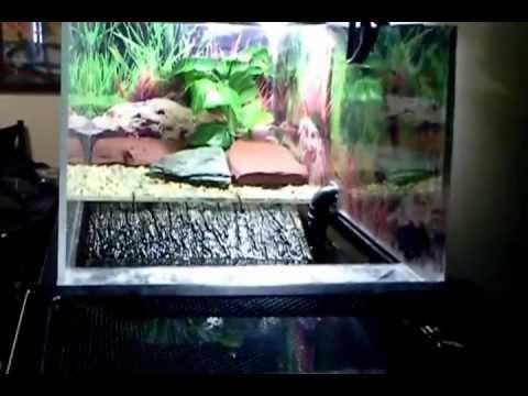 Turtles Above Tank Basking Area 55 Gallon Tank Youtube